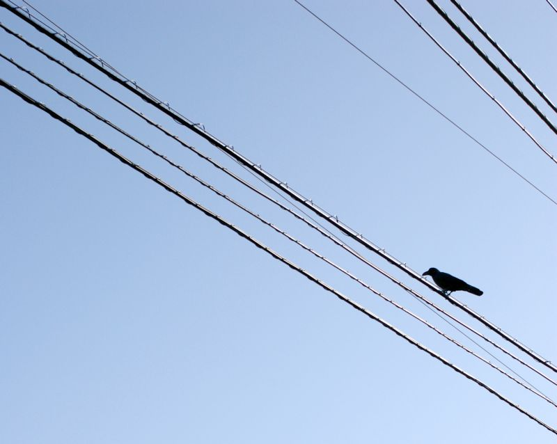 bird on electric line